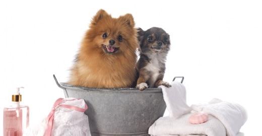 peluqueria canina de bajo estres