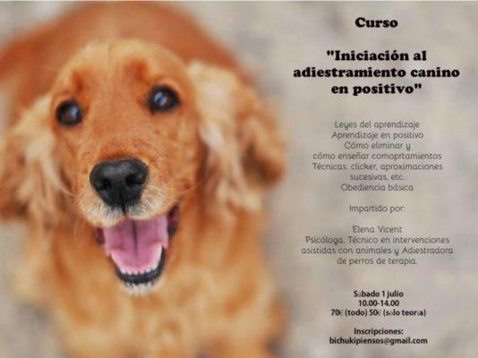 Curso: Iniciación al Adiestramiento canino en Positivo