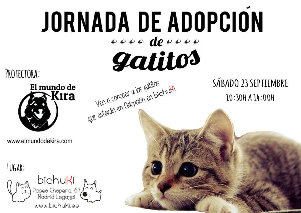 adoptar gatitos madrid