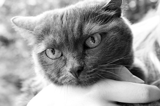 gato está enfadado