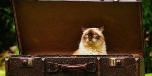 gato-enfadado-vacaciones-bichuki