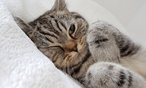 25 Señales de que a tu Gato le duele algo