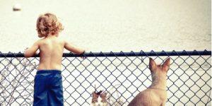 perro-niños-y-gatos