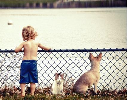 Perros, gatos y bebés
