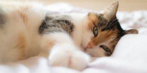 enfermedades-en-gatos-sintomas