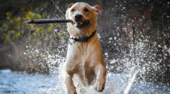 Anima Strath o de cómo ayudar a que mi perro recupere Energía