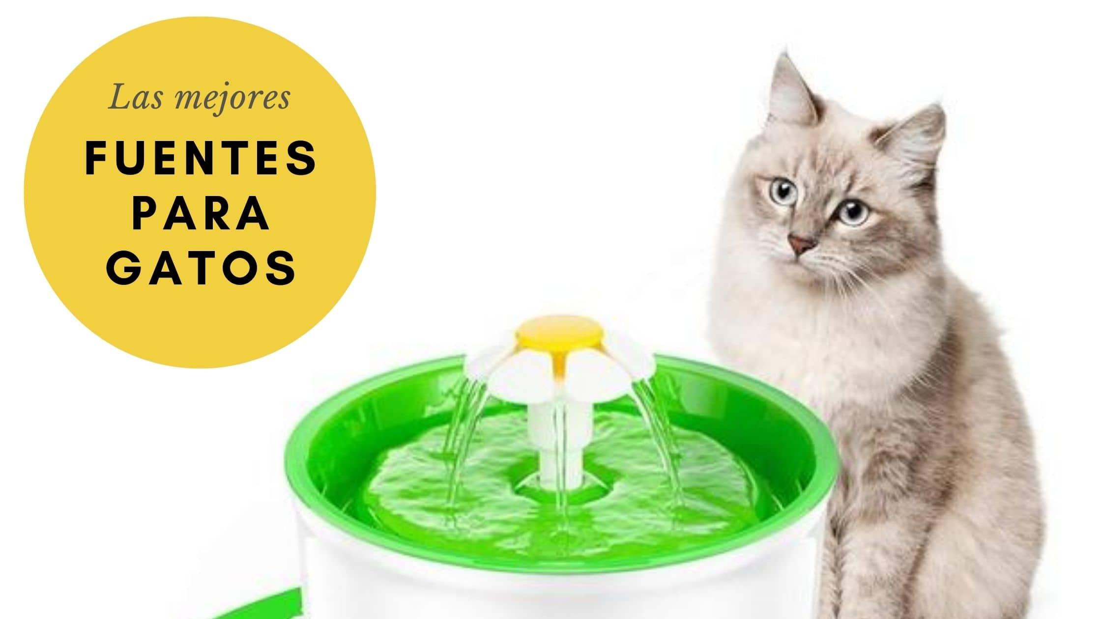 fuentes para gatos